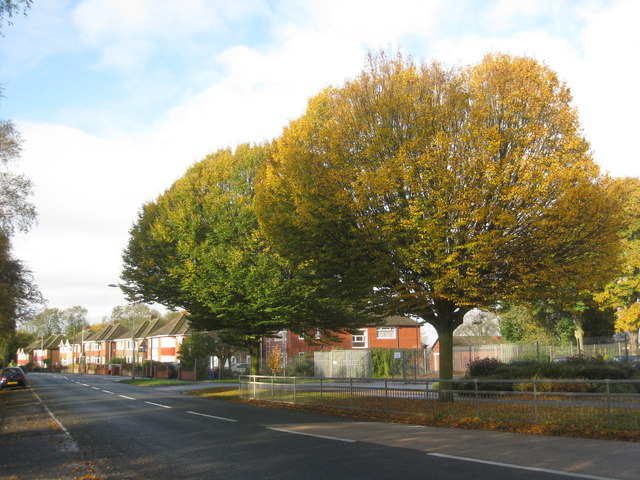Ferry Road in autumn