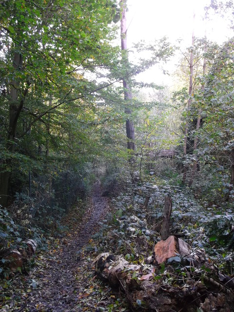 Footpath in Rowhill Wood