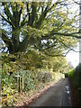 TQ4758 : Beech tree overlooking Sundridge Lane by Ian Yarham