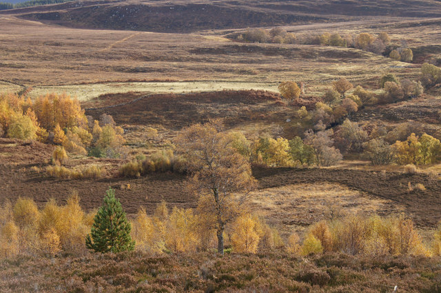 Moorland with scattered trees, Corrimony