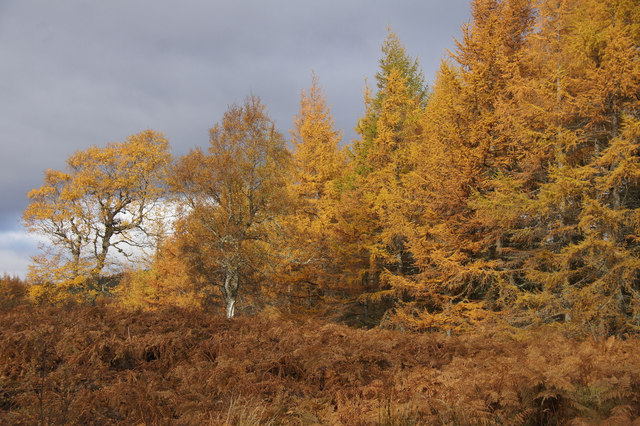 Yellow birches and larches, Corrimony