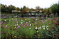 TQ2276 : Flowers, London Wetland Centre, Barnes, London by Christine Matthews