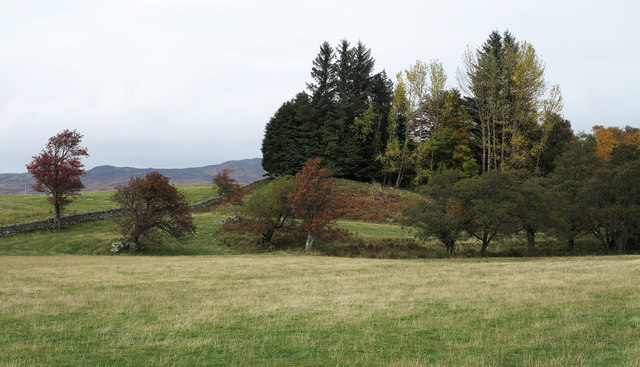 Knoll with trees on south side of Loch Rannoch