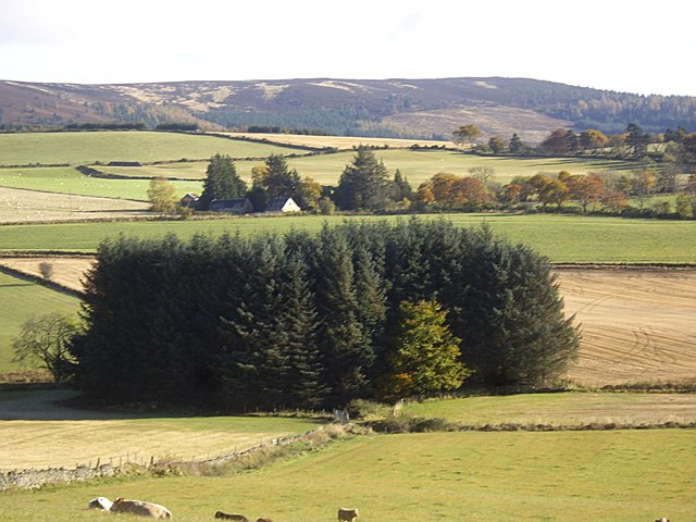 Field boundaries and copse by the Learney Burn