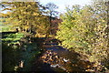 SJ9768 : Autumn trees by Clough Brook by Bill Boaden