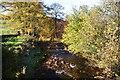 SJ9768 : Autumn trees by Clough Brook by Bill Boaden