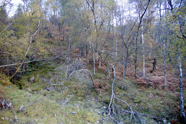 Woodland, Tighchuig, Strathglass