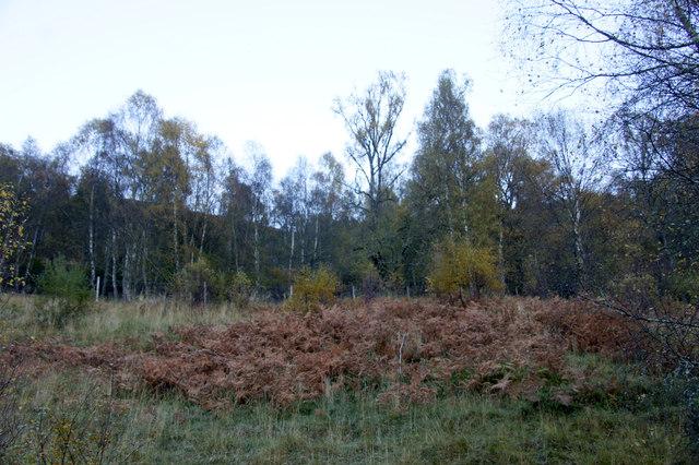 Woodland, Crochail, Strathglass