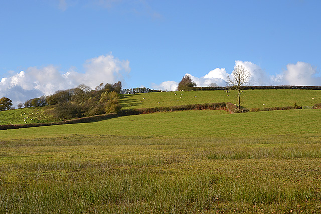 Fields on Bryn Scolfa
