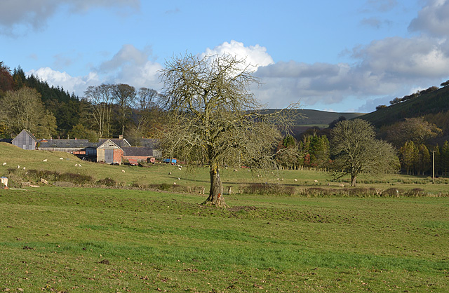 Tree and fields, Abbey Cwm-hir