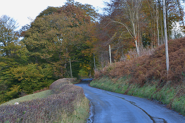 Eastern approach to Abbey Cwm-hir