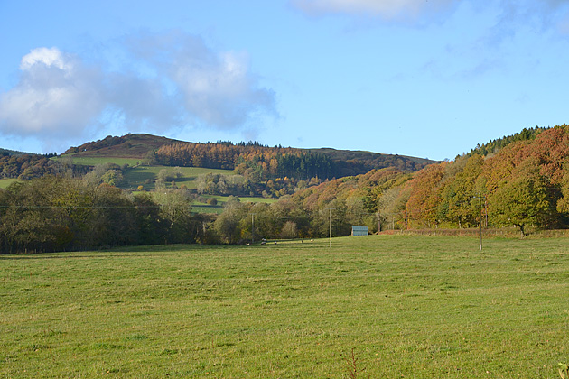 Field by the Clywedog Brook