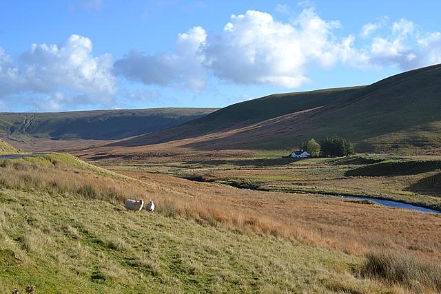 The Elan valley above Aber Glanhirin