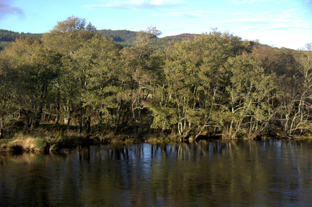 Woodland beside the River Beauly at Erchless