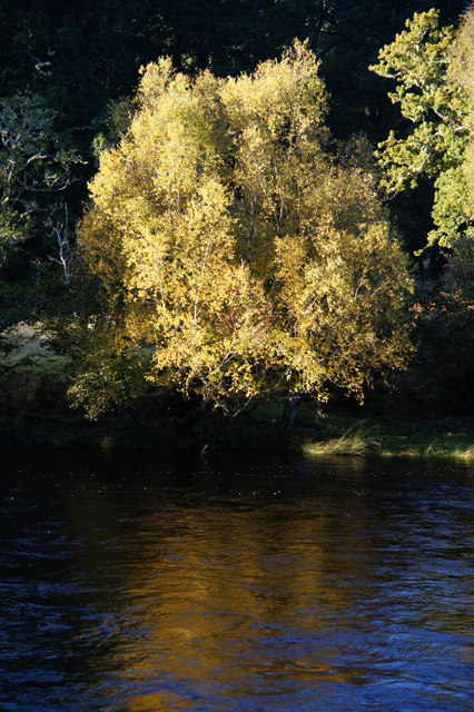 Tree beside the River Beauly