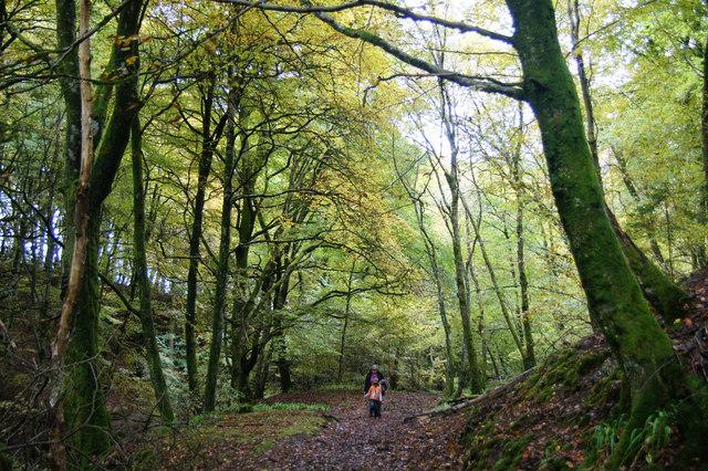 Beech woodland in Den o' Alyth