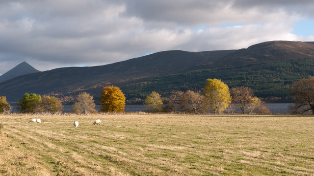 Field with sunlit trees