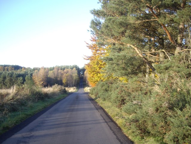Minor road by western edge of Scotstown Wood
