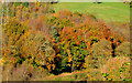 J3268 : Autumn trees, Barnett Demesne, Belfast (2) by Albert Bridge