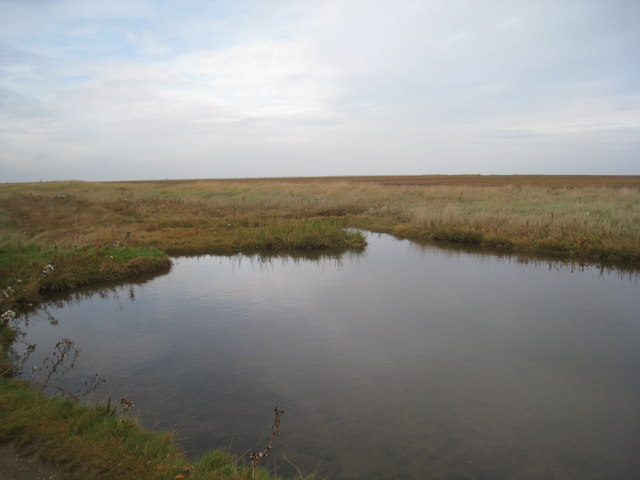 Pool in the salt marsh