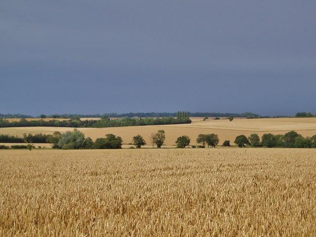Arkesden Fields