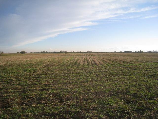Stubble field off Keyholme Lane