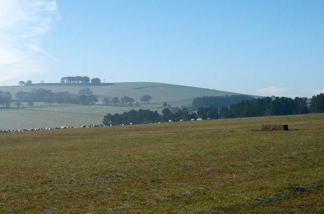 Field(s) west of Branch Villa