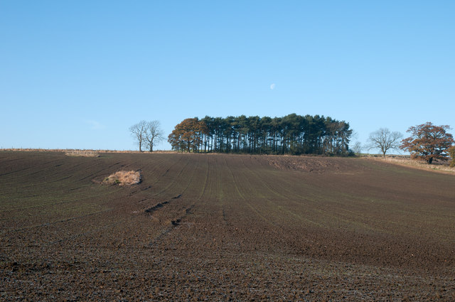 Field with trees west of B6301