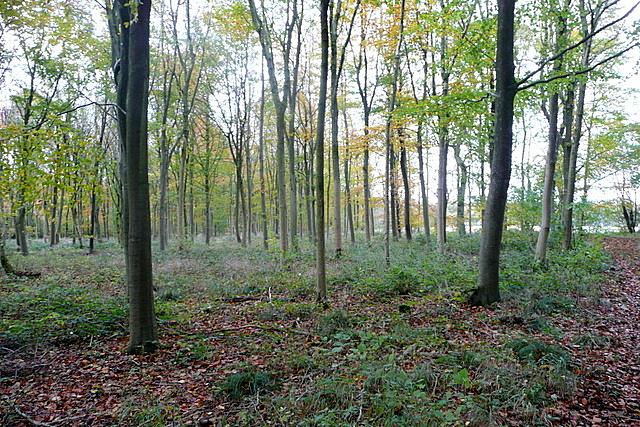 In Laurel Wood