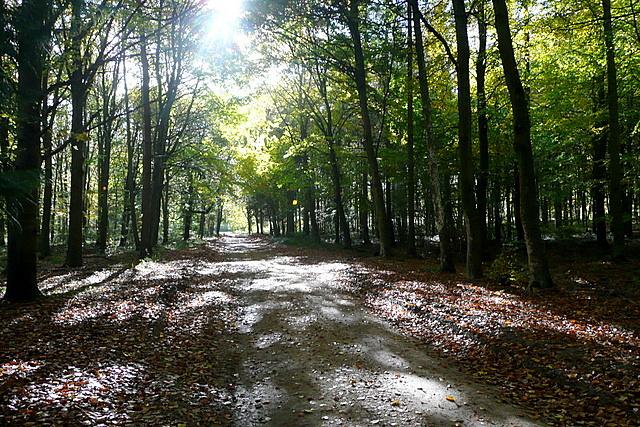 Dog Kennel Wood