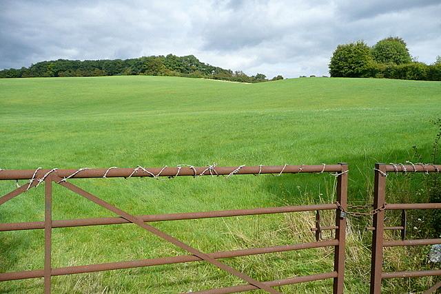 Grassland at Wooburn Moor