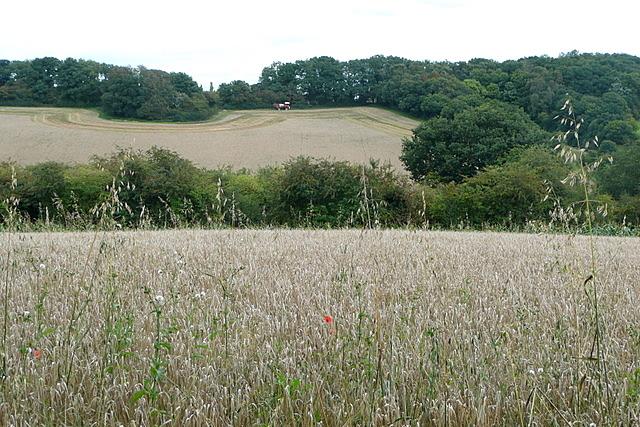 Farmland at Loudwater
