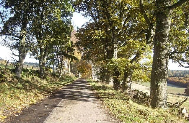 Road to Skerryalva on Learney Estate