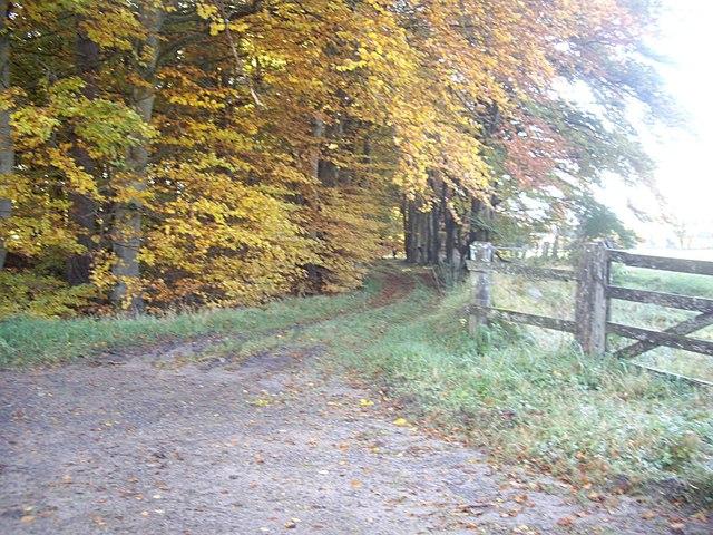 A track through the woodland strip near Netherlands