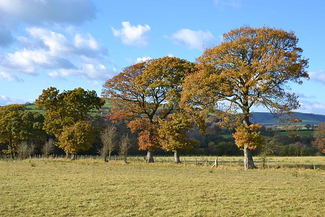 Trees near Treval