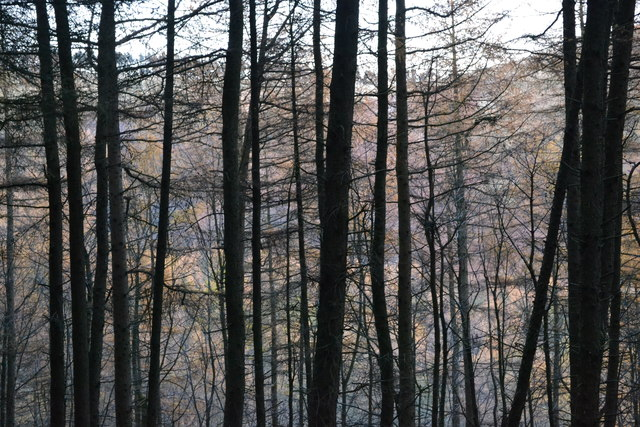 Looking through the trees near Hagglee Ford