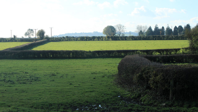 2012 : Fields and well trimmed hedgerows