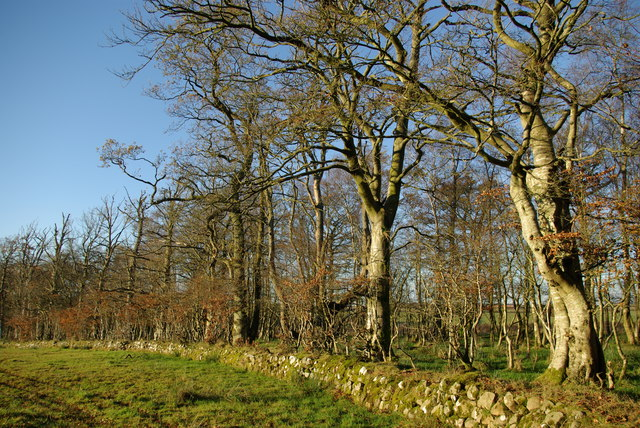 Woodland & drystane dyke north of Catrine Mains