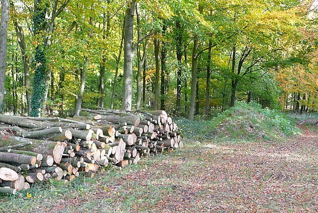 Shilcott Wood