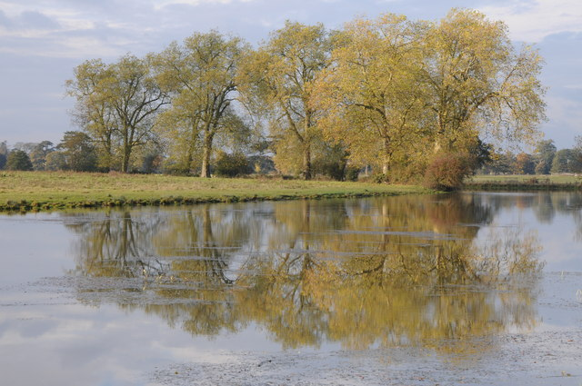 London plane trees reflected in Croome River