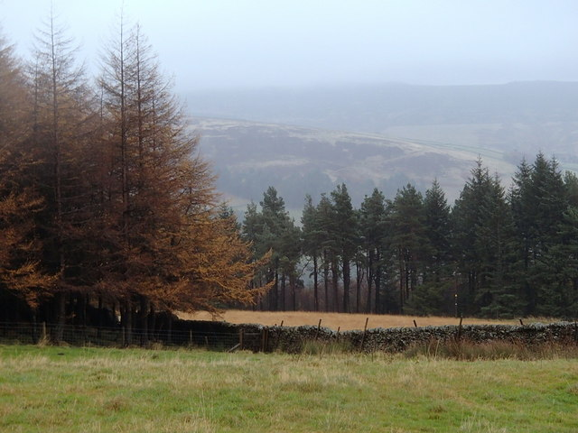 Forest, moorland and fields