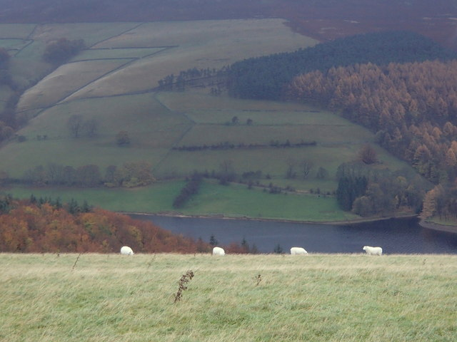 Sheep on Crook Hill and the upper Derwent valley