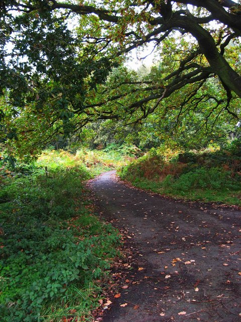 Public bridleway in Burlish Top Nature Reserve, Stourport-on-Severn