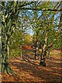 ST3087 : Carpet of autumn leaves, Belle Vue Park by Robin Drayton