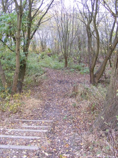 Hilton Wood Path