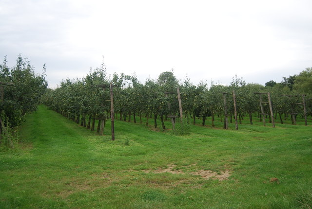 Orchard, Underlyn Lane