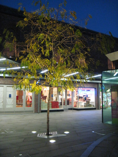 Tree in the Crowngate shopping centre