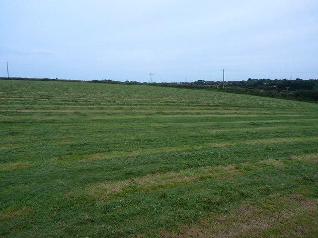 Hayfield east of Coosewartha Farm