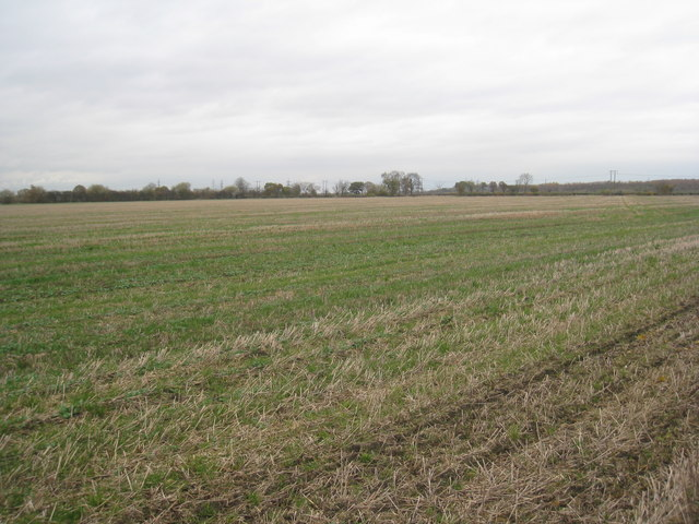 Stubble field, Arksey Common