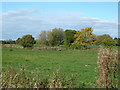 SJ5948 : Farmland north of Wrenbury-cum-Frith, Cheshire by Roger  Kidd